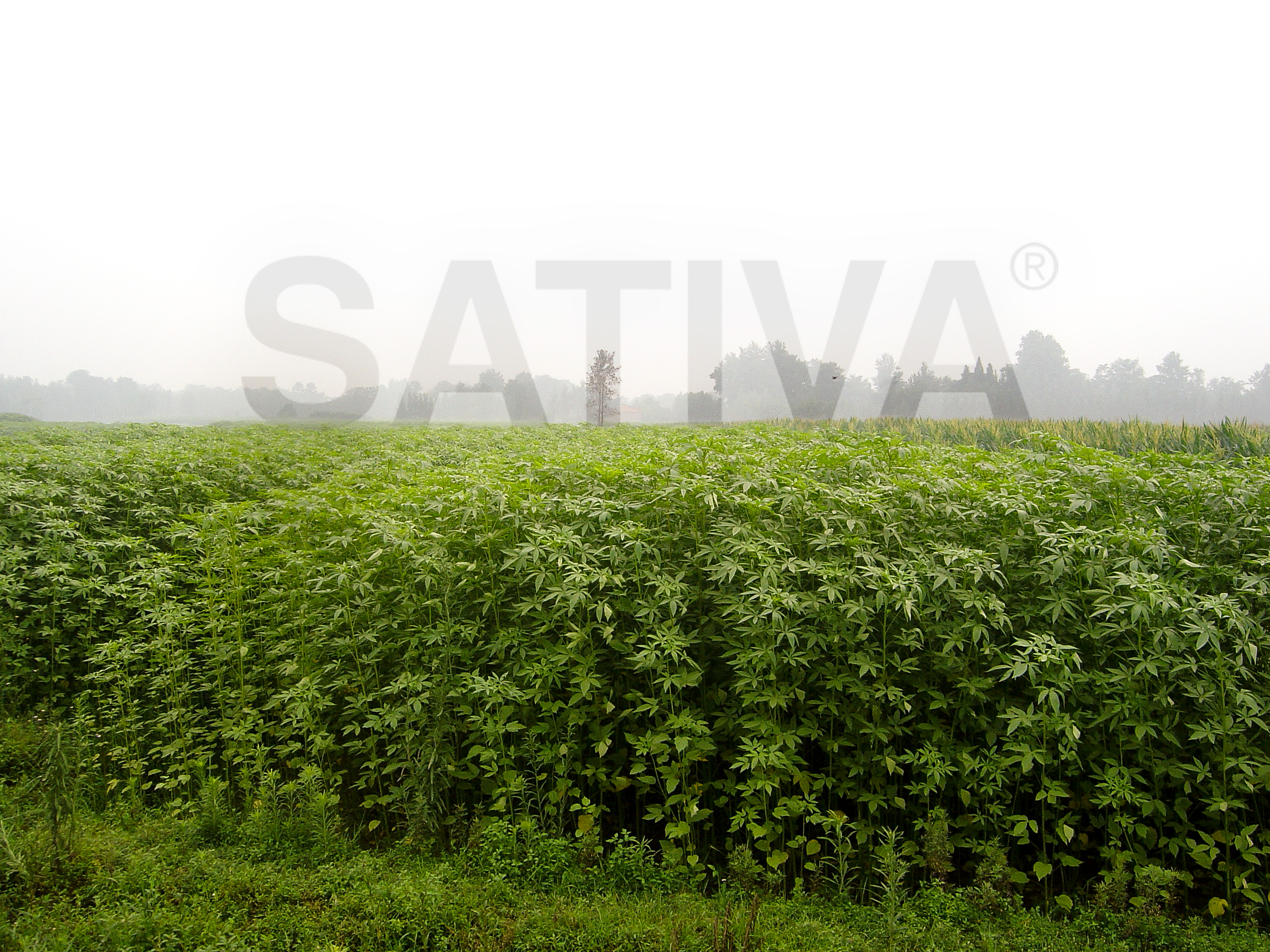 Welcome to Official Sativa® Hemp Store